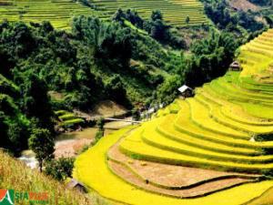 Asiaplus-Voyages-Vietnam-rizieres-Tule-Mucangchai