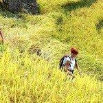 Asiaplus-Voyages-randonnée à Bac Ha