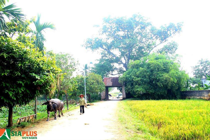 Asiaplus-Voyages-Vietnam-village-Duong-Lam