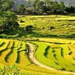 Puluong_retreat_Vietnam_randonnée Pu Luong