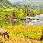 Puluong_retreat_Vietnam_landscape2-min