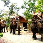 Vietnam-Tay-Nguyen-Daklak-balade-a-elephant3