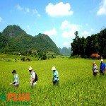 Voyages-Vietnam-Mai-Chau-Vallee6