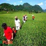 Voyages-Vietnam-Voyages-Vietnam-Randonnée-Mai Chau-Vallee7