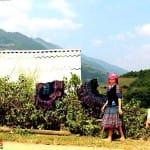 Asiaplus-Voyages-Vietnam-ethnies-minoritaires78