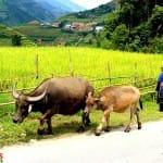 Asiaplus-Voyages-Vietnam-ethnies-minoritaires92