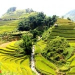 Asiaplus-Voyages-Vietnam-rizieres-Tule-Mucangchai110