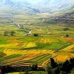Asiaplus-Voyages-Vietnam-rizieres-Tule-Mucangchai12
