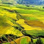 Asiaplus-Voyages-Vietnam-rizieres-Tule-Mucangchai17