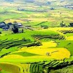 Asiaplus-Voyages-Vietnam-rizieres-Tule-Mucangchai22
