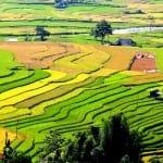 Asiaplus-Voyages-Vietnam-rizieres-Tule-Mucangchai5