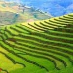 Asiaplus-Voyages-Vietnam-rizieres-Tule-Mucangchai65