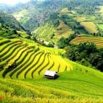 Asiaplus-Voyages-Vietnam-rizieres-Tule-Mucangchai78