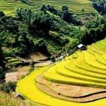 Asiaplus-Voyages-Vietnam-rizieres-Tule-Mucangchai93-2