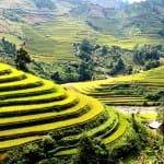 Asiaplus-Voyages-Vietnam-rizieres-Tule-Mucangchai98
