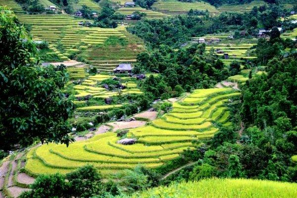 Voyages au Vietnam - rizières en terrasses - Hagiang