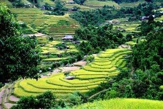 Voyages au Vietnam - rizières en terrasses - Hagiang1-2