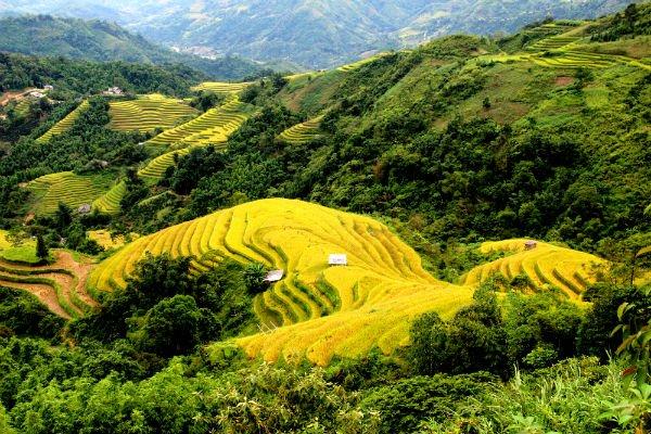 Voyages au Vietnam - rizières en terrasses - Hagiang3