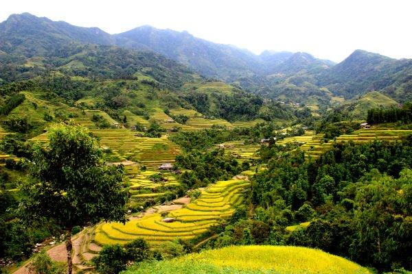 Voyages au Vietnam - rizières en terrasses - Hagiang4